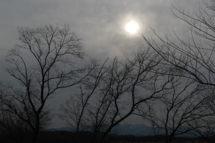 2月22日(日)つむぎねワークショップ in the forest vol.3
